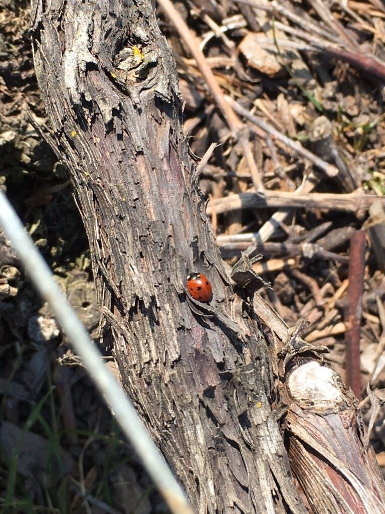 remy-ladybirds613