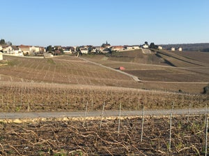 cramant-vineyard-2-300