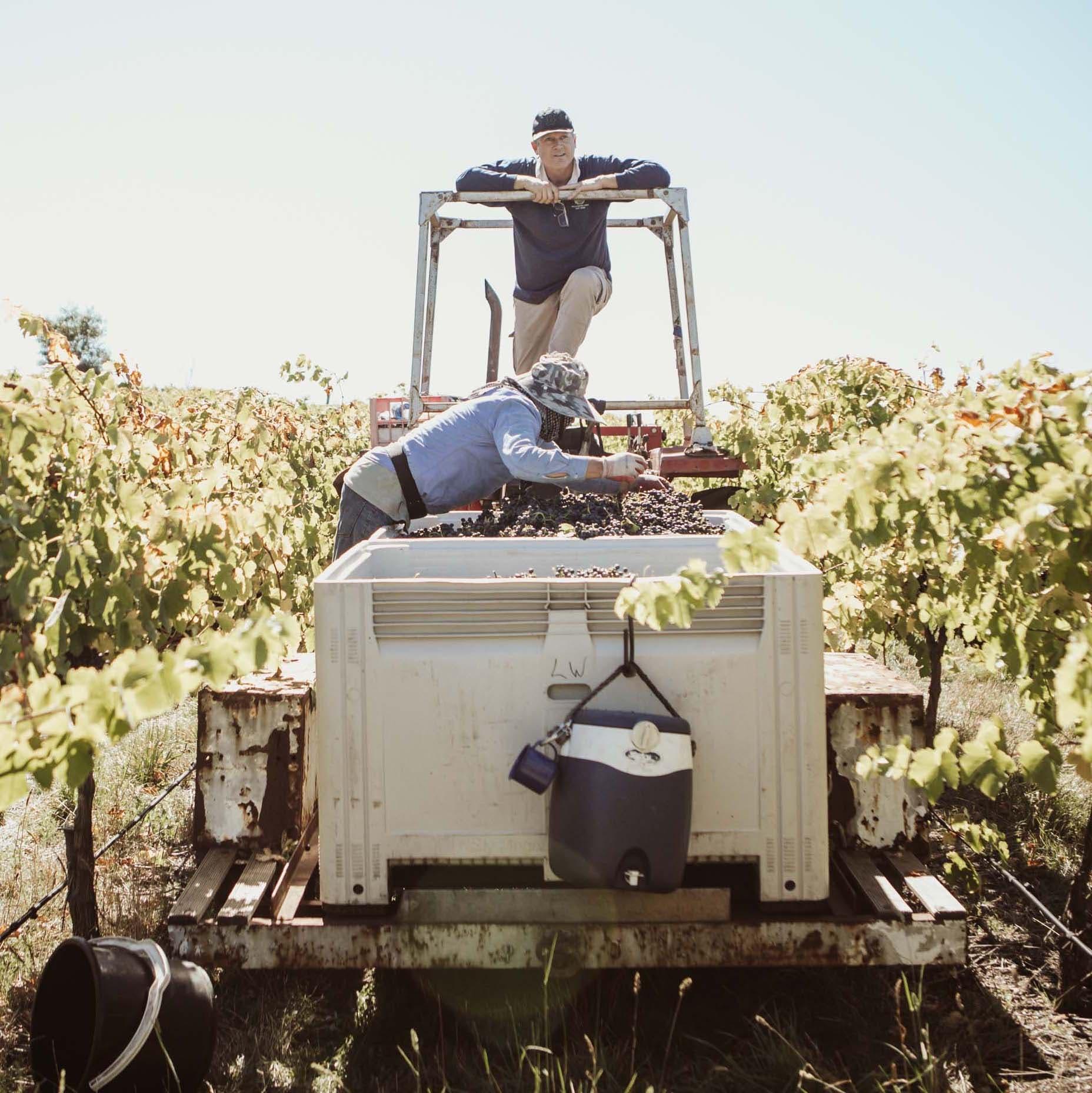 Manser Wines 2021 Vintage
